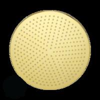 Radius C7 Верхний душ, D300 мм антикальций, золото арт. 26102